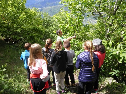 Hans Laimer erklärt den Kindern Wissenswertes über die Edelkastanie.